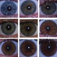 Всё цвета глаз
